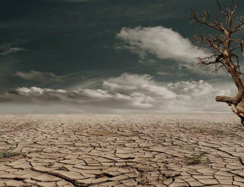 Calendario Ecológico: Día Mundial contra la Sequía y Desertificación
