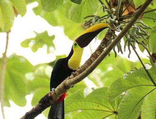 Calendario Ecológico: Día Internacional de La Preservación de los Bosques Tropicales