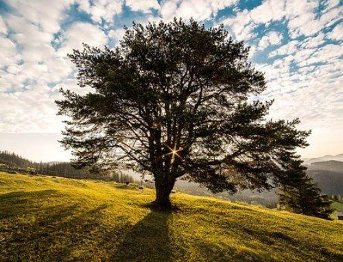 Calendario Ecológico: Día Mundial del medio ambiente