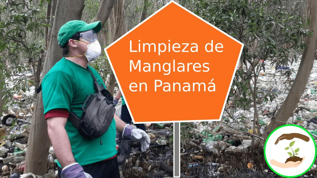 limpieza-manglares-panama-ycmt