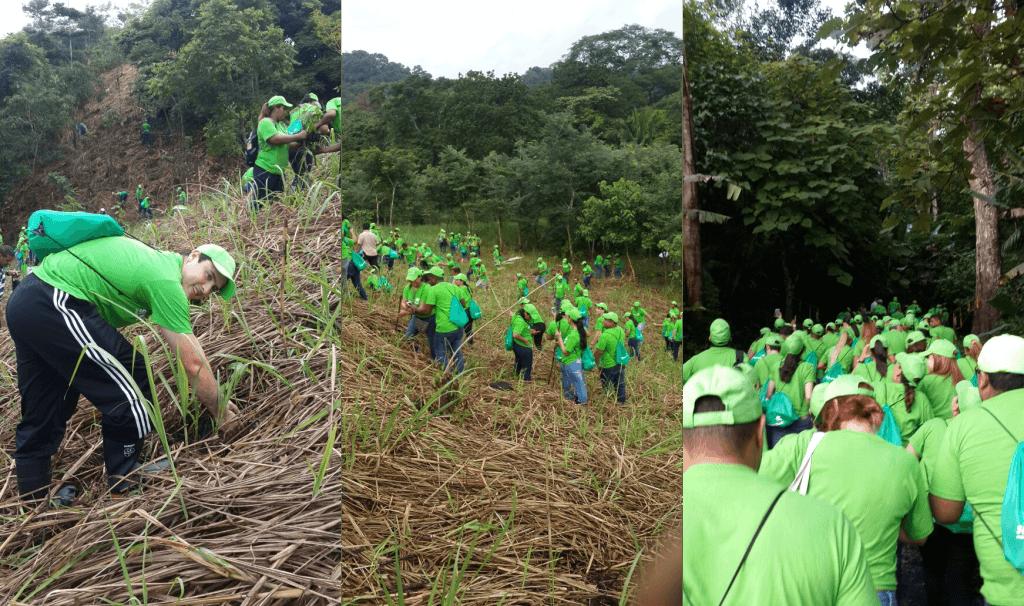 reforestacion-ancon