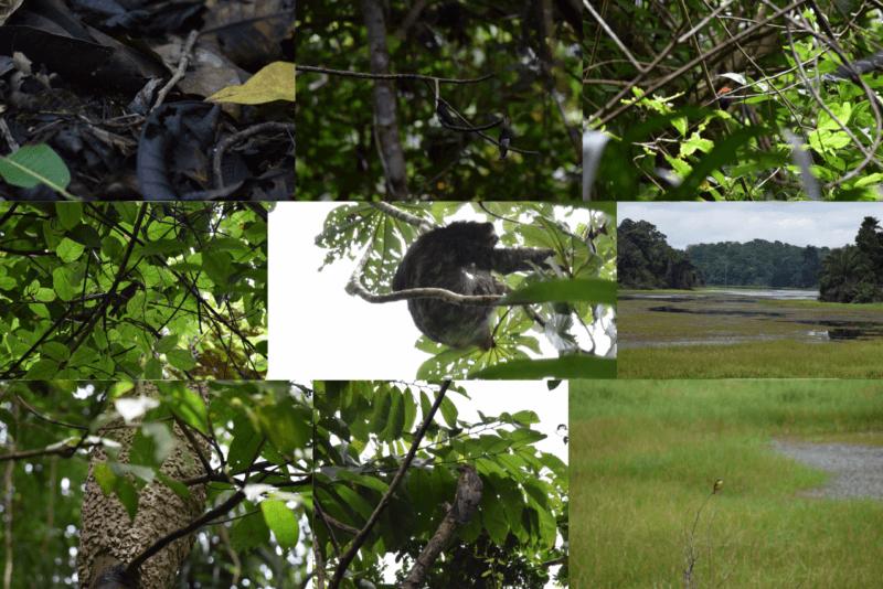 visita-panama-rainforest-discovery-center