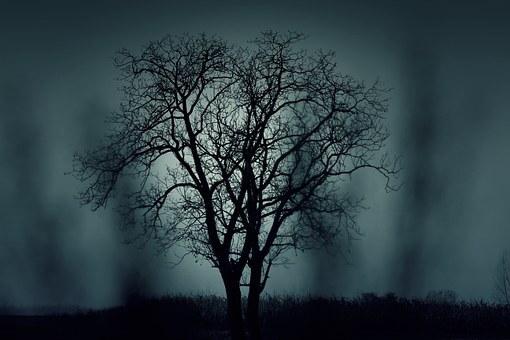 Esta imagen tiene un atributo ALT vacío; su nombre de archivo es tree-407256__340.jpg
