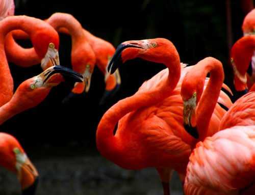 Día Mundial de La Biodiversidad 2020