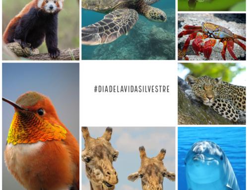 #Dia Mundial de la Vida Silvestre 2021