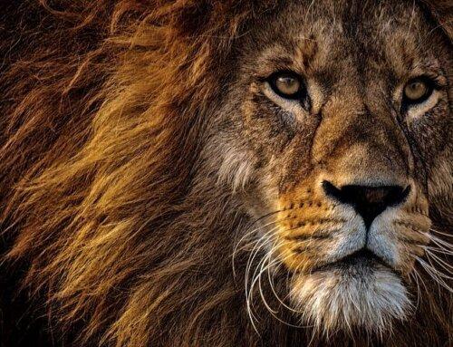# Día Mundial del León